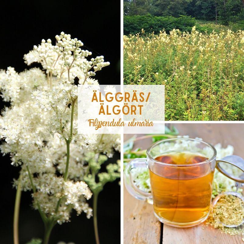 Älggräs-Älgört-Örter-Scandinavian Herbs
