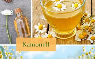 Kamomill (Matricaria recutita/Matricaria chamomilla)