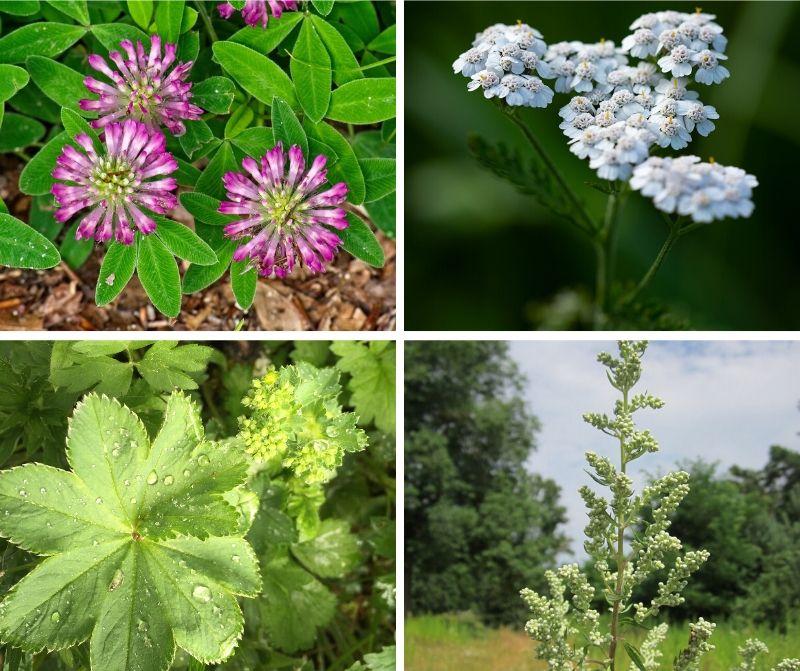 Kvinno-Örter-Scandianvian Herbs