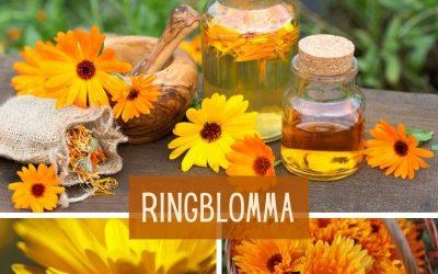 Ringblomma (Calendula officinalis)