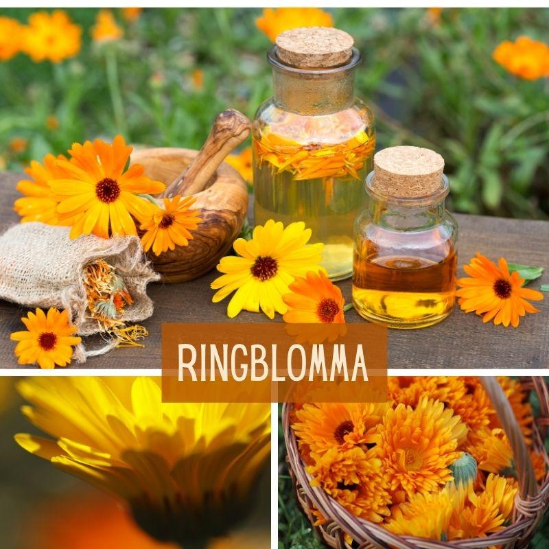 ringblomma-mix-ört